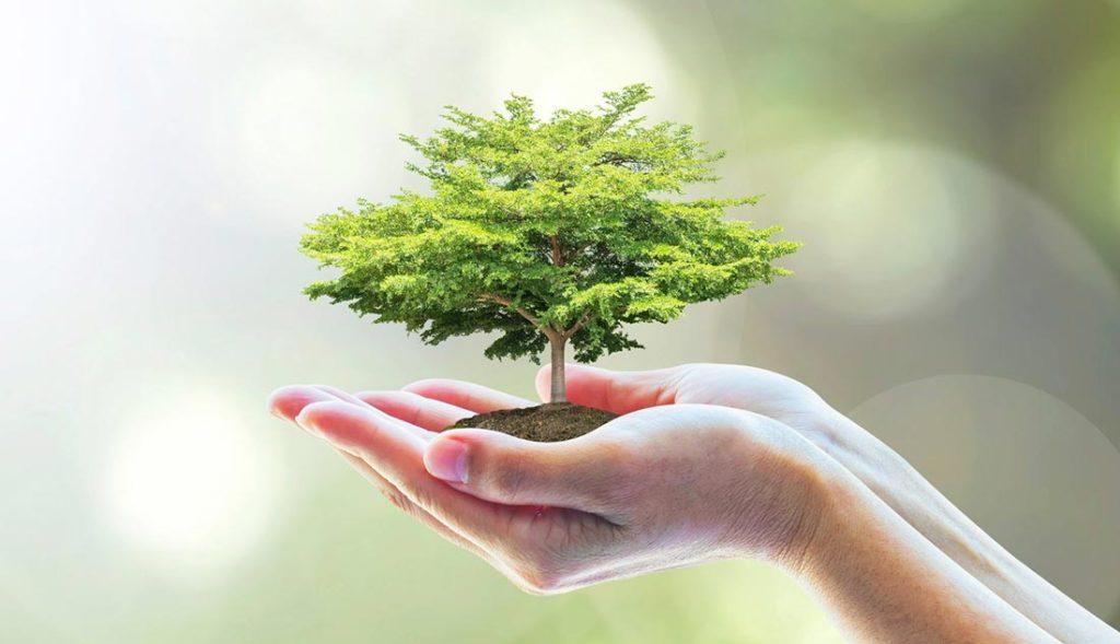 Un albero per Christian